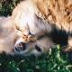Ricetta veterinaria elettronica